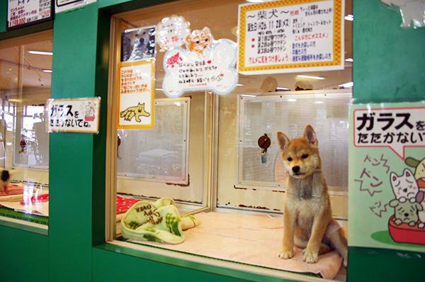 かるなばーるの犬猫販売